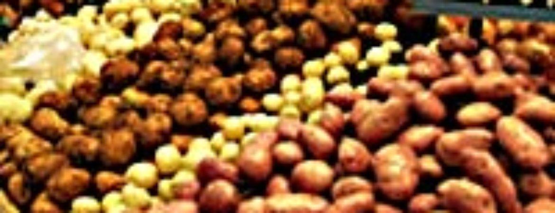 """Kartoffeln aus """"Familientag mit Slow-Food Niederbayern: Rund um die Kartoffel"""" im Stadtmuseum Deggendorf"""